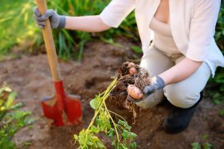 Минсельхоз решил привлечь к уборке урожая студентов