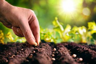 Сев яровых зерновых в Рязанской области выполнен на 68% от плана