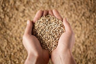 На текущей неделе в регионах ЮФО отмечается стабилизация цен на зерно