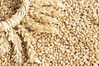Правительство России ввело квоту на экспорт зерна