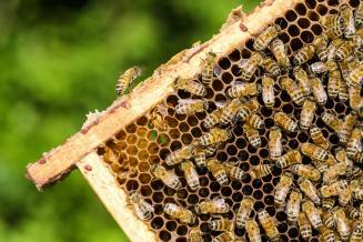 Минсельхоз: в каждом субъекте РФ должен быть создан СПК в области пчеловодства