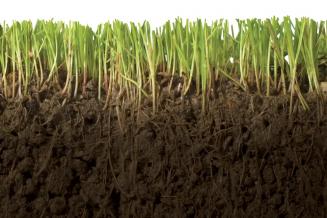 В Томской области более чем в 2 раза увеличили объем внесенных органических удобрений