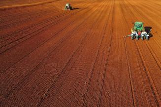 В Ингушетии яровой сев зерновых проведен на 20,5 тыс. га