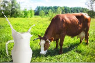 В Красноярском крае произведено на 12 тыс. т больше молока
