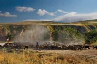 Животноводы Дагестана начали перегон овец с зимних пастбищ на летние