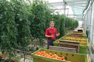 Производство тепличных овощей стало рекордным
