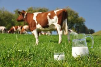 1-е место в СФО: продуктивность коров в Томской области выросла до19,2 кгмолока вдень