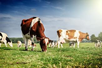 В Тамбовской области задень получено свыше 276 т молока