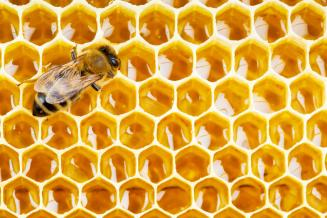 В России заработала онлайн-платформа для фермеров и пчеловодов