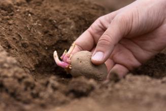 Минсельхоз прогнозирует увеличение площади посадки овощей