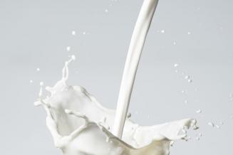 В Удмуртии зафиксирован рекордный суточный надой молока: 20 кг от одной коровы