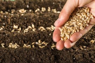 Аграрии Республики Алтай посеяли треть яровых культур от плана