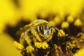 Российские ученые предложили новое средство спасения пчел от отравления пестицидами