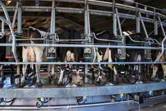 «ЭкоНива» вошла в пятерку крупнейших производителей молока в мире