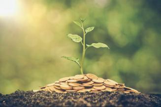 На развитие садоводства в Краснодарском крае выделено 716,1 млн руб.