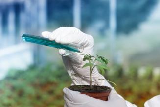 В России создали безвредное для насекомых средство для борьбы с грибком на растениях