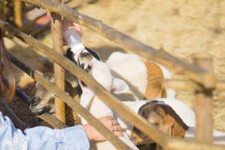 Российская бизнес-игра для аграриев становится международной