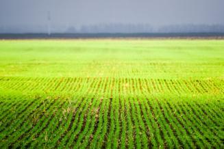 В Нижегородской области завершен сев основных сельхозкультур, началась кормозаготовка