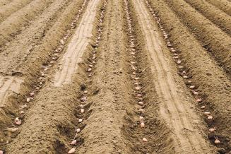 Аграрии Свердловской области начали обработку посевов и заготовку кормов