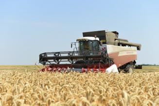 В Калмыкии обмолочено 28,1 тыс. га зерновых и зернобобовых культур