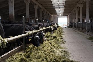 В Ярославской области создается Центр компетенций органического сельского хозяйства