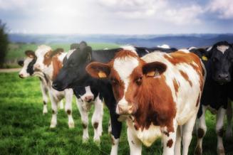 В Мордовии построят крупный молочный комплекс