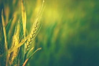 Оренбургская область занимает первое место в ПФО по площади сева зерновых
