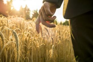 Правительство внесло в Госдуму проект изменений в закон о развитии сельского хозяйства