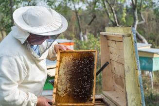 Законопроект о пчеловодстве внесен в Госдуму