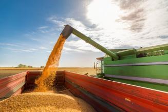 Производство зерна в России в 2020 году может составить 122,5 млн т, а экспорт 45 млн т