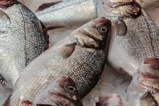 Оборот организаций отрасли рыболовства ирыбоводства в Костромской области вырос в2,1 раза