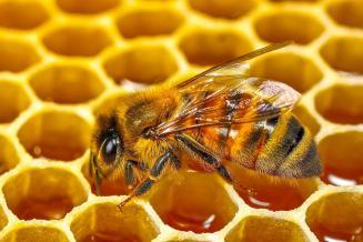 Пчеловоды Липецкой области намерены активно развивать промышленное пчеловодство