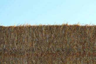 Объемы заготовленных кормов во Владимирской области превышают прошлогодние