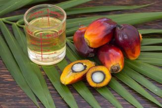 Как и почему пальмовое масло стало лидером мировой торговли растительными маслами