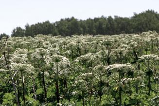 Правительство поручило проработать финансирование госпрограммы вовлечения в оборот сельхозземель