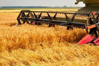 Намолот пшеницы в Ульяновской области почти в 5 раз выше прошлогоднего