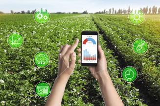 К 2024 году Минсельхоз России планирует перевести все услуги в электронную форму