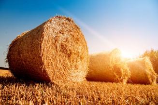 Чувашия вышла на первое место в России по экспорту сена