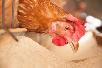 Ученые из РФ разработали технологию производства кормов из отходов сельского хозяйства