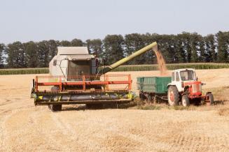 Сбор озимой пшеницы, ячменя игороха в Тамбовской области превысил 96 тыс. т