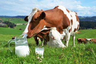 Производство молока в Чувашии увеличилось на 6%