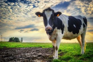 Минсельхоз: Россия может достичь самообеспеченности молоком к 2027 году