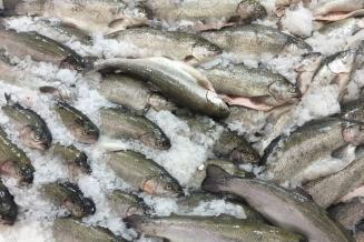 Предприятия Чукотки добыли более 140 тонн лосося в путину-2020