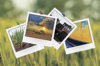 Главные аграрные события весны в Новосибирской области
