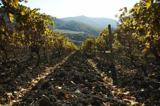 Минсельхоз Крыма довел до крымских аграриев более 1,24 млрд рублей