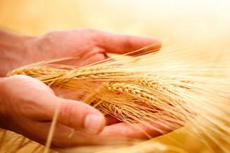 У Минсельхоза России нет серьезных опасений за урожай зерна этого года