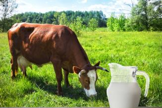 В январе — мае 2020 года хозяйства Вологодской области произвели 245,1 тыс. т молока