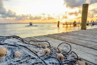 Рост вылова минтая в Беринговом море увеличит общероссийскую добычу на 10%