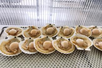 Производство аквакультуры в Приморье увеличилось на 65%