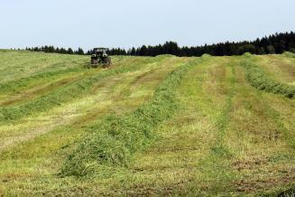 В Смоленской области к 13 июля скошено 38,7 тыс. га трав